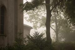 trees in the mist (mkniebes) Tags: morning autumn trees mist church fog zeiss dof nebel foggy depthoffield bochum dunst zf2 meinolphuskirche makroplanar2100