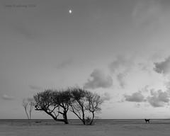 Howling at the Moon (Lane Rushing) Tags: nikon southcarolina charleston d600 bigmomma 2470mmf28 follyisland herowinner