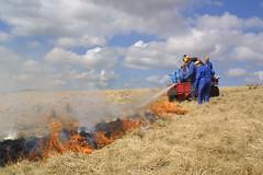 Swaling Long Holcombe (Exmoor National Park) Tags: people farming working burning moor moorland exmoor holcombe exmoornationalpark swaling