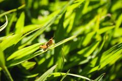 (petitelunatique) Tags: flowers summer brazil portrait nature mushroom rose digital canon butterfly garden landscape photography countryside dragonfly farm stio lightroom jaboticatubas vsco canont1i