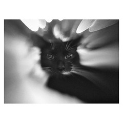 Mobile-2 (Ana~Rosenberg) Tags: mobile lensbaby cat cellphone iphone sweetspot lm10 lbm10 seeinanewway kittyfamilypet
