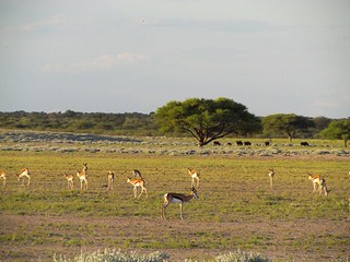 Botswana Hunting Safari 44