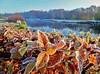 Schinveld, 25 november, Foto: Ria Gerards
