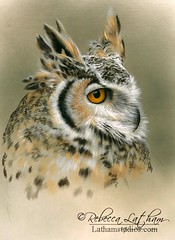 Great Horned Owl Quick Draw (3hrs), 9in x 12in, opaque and transparent watercolor on board, Rebecca Latham Hope you enjoy! ..share if you like. #art #painting #miniatureart #watercolor #realism #wildlifeart #wildlife #artoftheday #handpainted h (rebeccalatham) Tags: rebecca latham