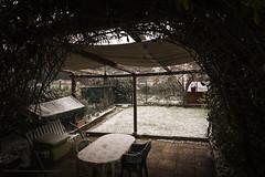 Let it snow!!! (Lifeinpicture) Tags: snow cold garden december perugia umbria