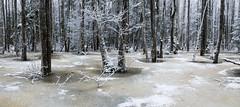 The Flood (Villem Voormansik) Tags: trees winter white snow ice water forest estonia flood january fifthseason soomaa