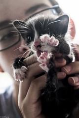 _DSF2589 (mChuca) Tags: alex maria gato cachorro luis illa gatito islapancha jatuno manuelprezferro