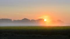 Nebelschwaden (AndyW Harz) Tags: fog sunrise nebel feld sonne morgen