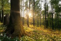 Spring forest (Zoli Tl) Tags: nikon d750 20mm