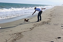 JOY. (alessandraccurcio) Tags: life sea dog love beach dogs me canon photography eos photo flickr foto you photos joy ke insieme 1200d