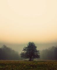 strom (Dominika Dan) Tags: morning sky mist tree nature fog canon haze czech lanscape