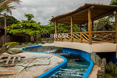 SE_Ubatuba0295 (Visit Brasil) Tags: horizontal arquitetura brasil fauna ubatuba sopaulo natureza cultura ecoturismo externa sudeste semgente projetotamar diurna brasil|sudeste brasil|sudeste|sopaulo brasil|sudeste|sopaulo|ubatuba brasil|sudeste|sopaulo|ubatuba|projetotamar