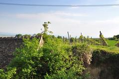 Gsing am Wagram Weinviertel Niedersterreich DSC_1527 (reinhard_srb) Tags: am himmel grn niedersterreich strauch busch wagram weinkeller weinstock stromleitung weinviertel weingarten gsing