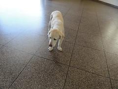 Epoxy Tile - Dog (Decorative Concrete Kingdom) Tags: dog animal tile flake diagonal epoxy chip