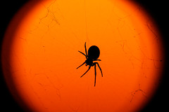 Scary (Bruno MATHIOT) Tags: light orange france color macro art animal night canon french eos spider lumire sigma alsace planet 105 nuit araigne 760d