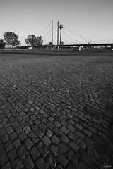 Rheinturm & Rheinkniebrcke (Lacmaaan) Tags: blackandwhite monochrome cityscape outdoor cobblestone nrw grayscale rhein rheinkniebrcke rheinturm schwarzweis macskak rajna monokrm