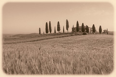 I Cipressini (Karsten Gieselmann) Tags: travel italien bw brown color nature monochrome landscape mono blackwhite natur lawn meadow olympus it tuscany sw pienza braun toscana valdorcia landschaft farbe reise toskana m43 mft schwarzweis microfourthirds mzuiko feldweidewiese 1240mmf28 em5markii kgiesel