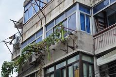 Orto.......volante (albi_tai) Tags: nikon shanghai case cina zucche palazzi orto d90 nikond90 albitai ortoaereo