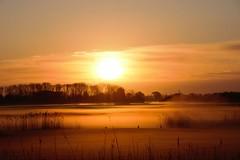 Opkomende zon Oost-Souburg met mist (Omroep Zeeland) Tags: mist natuur zeeland zon landschap oostsouburg opkomende wacheren