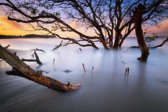 Almost Gone (eggysayoga) Tags: longexposure sea bali tree beach water sunrise indonesia lens landscape dead death asia fuji branches ss wide filter le 09 lee nd slowshutter cs fujifilm f2 12mm ultra bower batang pantai kayu graduated haida sanur matahari ncs f20 pohon gnd samyang xt1 nd1000 rokinon mertasari bigstopper