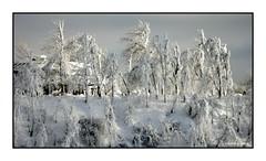 138 Niagara Falls, Ontario 2004 (DBattag) Tags: winter ice waterfalls scenary niagaraonthelake niagarafallsontario