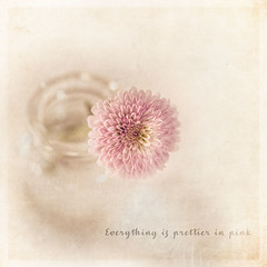 Everything is prettier in pink (RoCafe) Tags: pink stilllife flower soft quote pastels textured nikond600 nikkormicro105f28