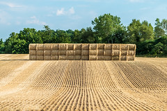 Stacked Hay (R3D_Photography) Tags: ny newyork field cut farm farming farmland fresh hay bale fingerlakes r3dphotography raysheleyiii