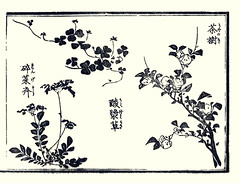 Creeping wood-sorrel, China tea and Chinese milk-vetch (Japanese Flower and Bird Art) Tags: china flower art japan japanese book thea tea chinese picture noda fabaceae oxalis creeping woodblock ukiyo woodsorrel astragalus sinicus milkvetch sinensis corniculata oxalidaceae theaceae fumiyuki readercollection