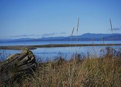 boardwalk view (marneejill) Tags: ocean beach grass view driftwood boardwalk parksville
