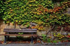 Fall Colors (Chino0008) Tags: fall colors leaves bench ob leafs der rothenburg tauber