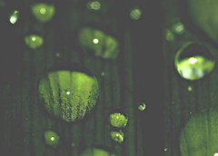 Raindrops II (Josh Rokman) Tags: green nature water rain outdoors nikond70 raindrops waterdrops naturemacro waterdropmacro raindropmacro