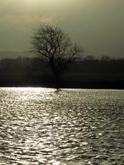 A Tree At Christmas (Bricheno) Tags: tree field river scotland farm escocia cart szkocja renfrew schottland whitecart scozia rivercart cosse whitecartwater  esccia   bricheno portnauld scoia