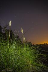 plumeros en la noche (hecho por la naturaleza y para la naturaleza) Tags: barcelona noche spain catalua plumeros nightstar llinars llinarsdelvalleslapedrera