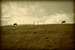Caballos (Manolo SP) Tags: espaa horse landscape caballos spain paisaje andalucia jan