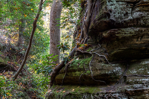 Roots, Rocks, and Moss