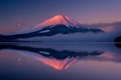 紅富士 / Beni-Fuji