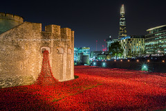 London Poppy Display at The Tower of London at Night (iesphotography) Tags: city uk greatbritain travel bridge houses red england urban building bus london tower english history clock tourism westminster thames architecture canon vintage outdoors big exterior place ben unitedkingdom britain grunge united traditional famous capital transport culture kingdom parliament bigben landmark scene icon palace tourist retro spire national poppy poppies government historical british remembrance toweroflondon redbus poppyappeal 1dx canon1dx ceramicpoppy