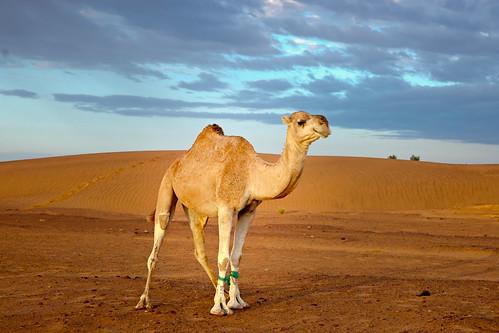 Ein Wüstenspezialist in seinem Element