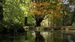 Autumn's charm (Tom Owen Abingdon) Tags: park bridge trees sky brown green beauty stone thames reflections river mirror walk charm oxford charming elegant stroll oxfordshire embankment elegance christchurchmeadows tomowen