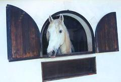 IL ME REGARDE (pandora2013) Tags: na da janela cavalo portas cocheira