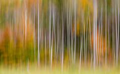 Lxngtn_3165.jpg (C.Fredrickson Photography) Tags: abstract motion fall october kentucky ky 2014 us27 draggingshutter carlfredrickson wwwcfredricksonphotographycom ©carlfredrickson2014