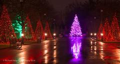 Longwood Gardens decorated for Christmas -2 (RichHaig) Tags: reflections christmastree christmaslights pa longwoodgardens gitzotripod kennettsquare nikond800 nikonnikkor24120mmf40