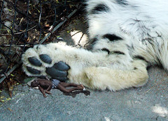 1472 (Jasper Kyodaina) Tags: man guy feet fetish giant foot paw nail claw squish sole crush giantess trample esmagar