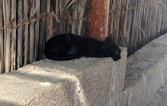 Black kitten ($!|v!@) Tags: fish man colour beach nature animal cat landscape bay boat fishing kitten mare arabia oman arabo salalah