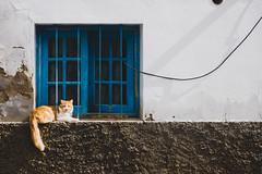 Cat (Daniele Zanni) Tags: travel window cat google spain flickr fuerteventura canaryislands facebook squarespace 500px iceboxcool x100s