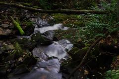 autumn in Nantahala 34 (furrycelt) Tags: autumn mountains fall nature water outdoors nc nikon october stream natural 85mm northcarolina appalachian nantahala appalachianmountains d600 nikon85mmf14 nikon85mmf14afd