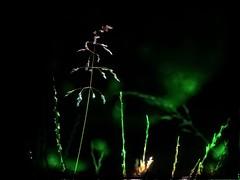 Herbes (domiloui) Tags: macro nature flickr jardin creation lumiere lorraine campagne hdr couleur insolite ambiance abstrait cooliris abaucourt naturallive blinkagain infinitexposure