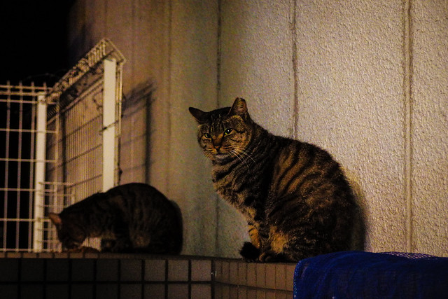 Today's Cat@2015-01-14