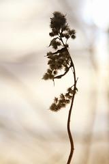 Winterplaatje (Robert de Greef) Tags: winter sun nature netherlands nederland natuur eindhoven zon