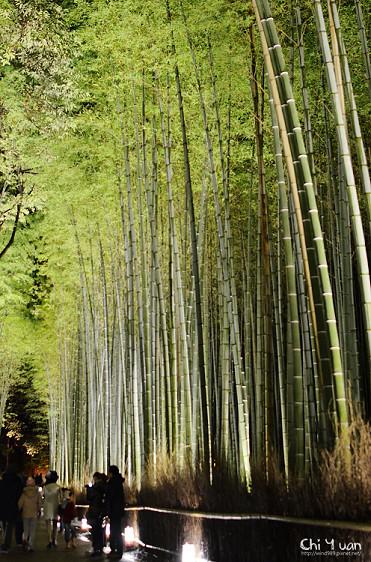 嵐山花燈路-竹林之道10.jpg